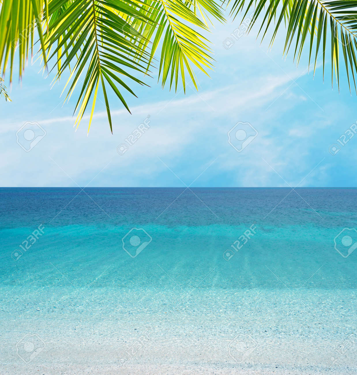 palm leaves by the shore - 25213151