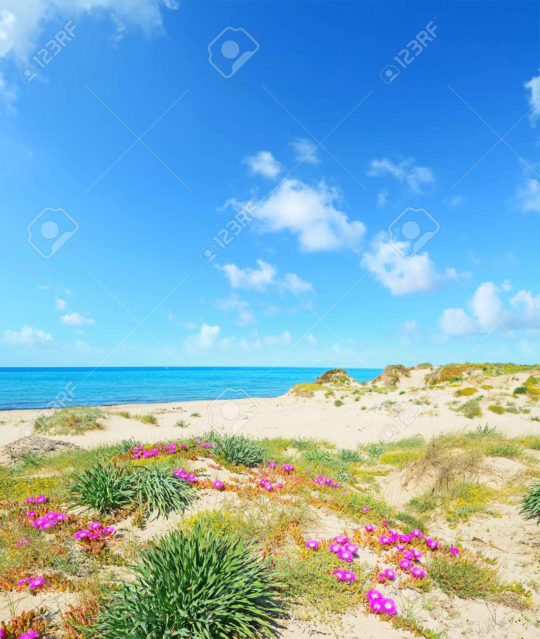 Sardinien rosa strand