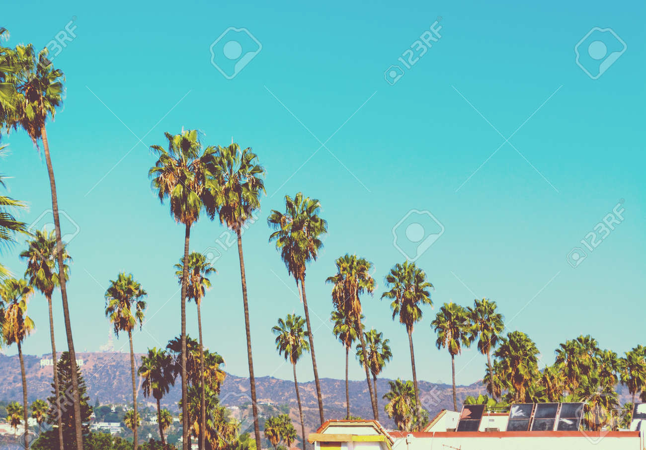 Tall Palm Trees With World Famous Hollywood Sign On The Background