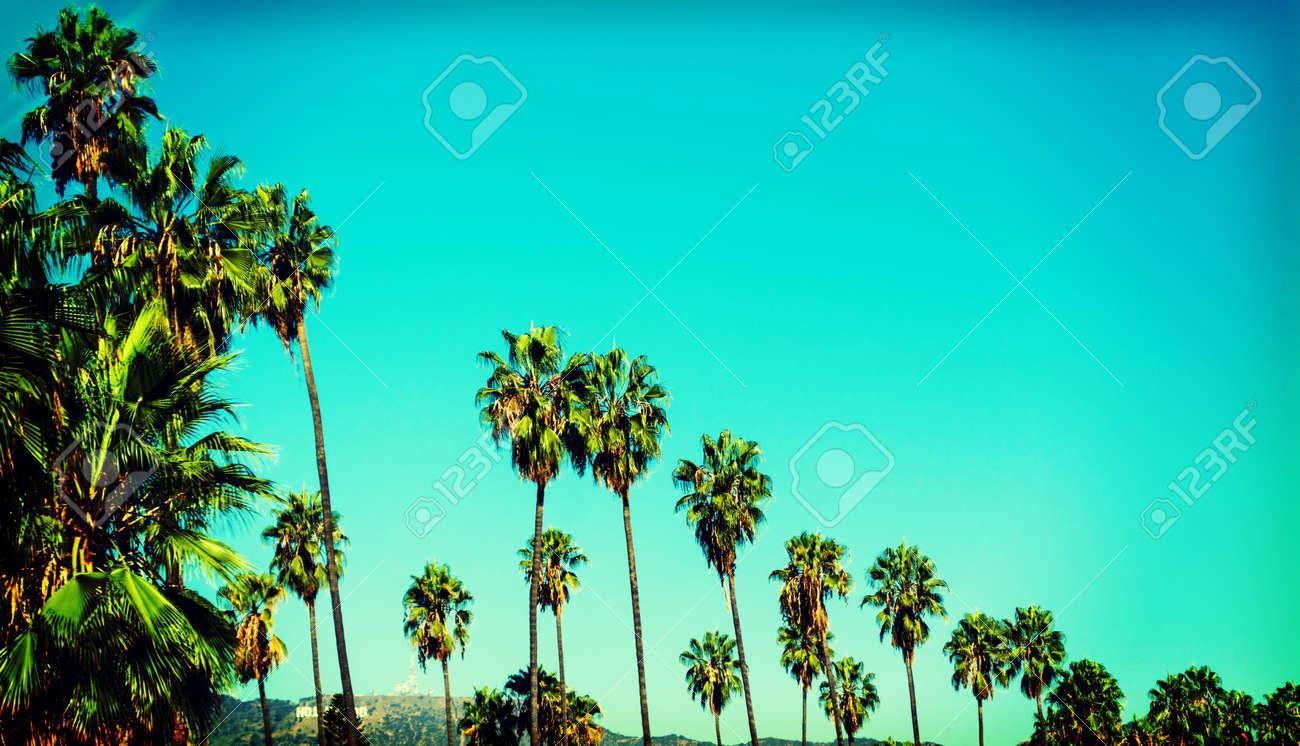 Palm Trees With World Famous Hollywood Sign On The Background Los Angeles Southern California