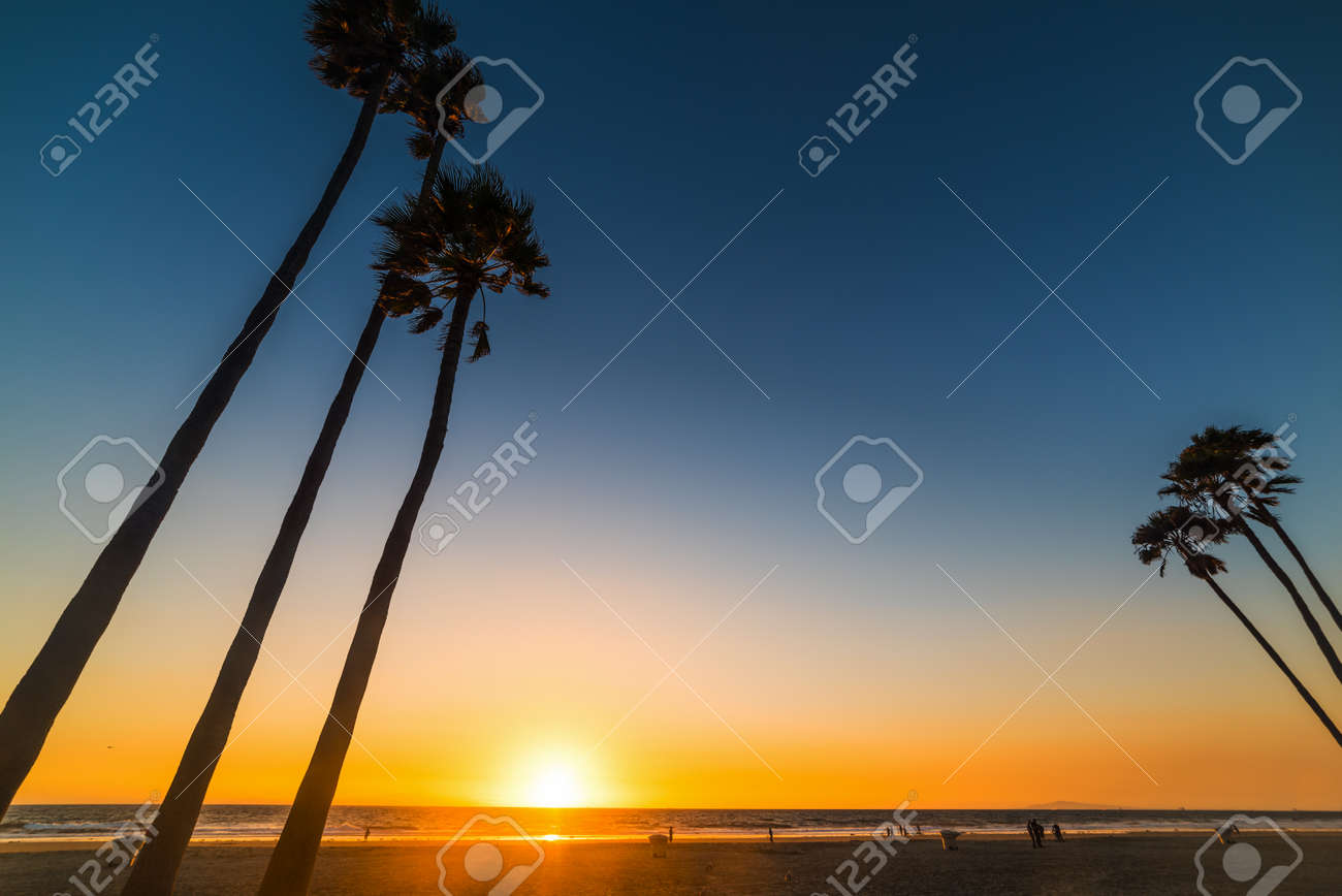 Tall palm trees in Newport Beach at sunset, Orange County. Southern California, USA - 114628880