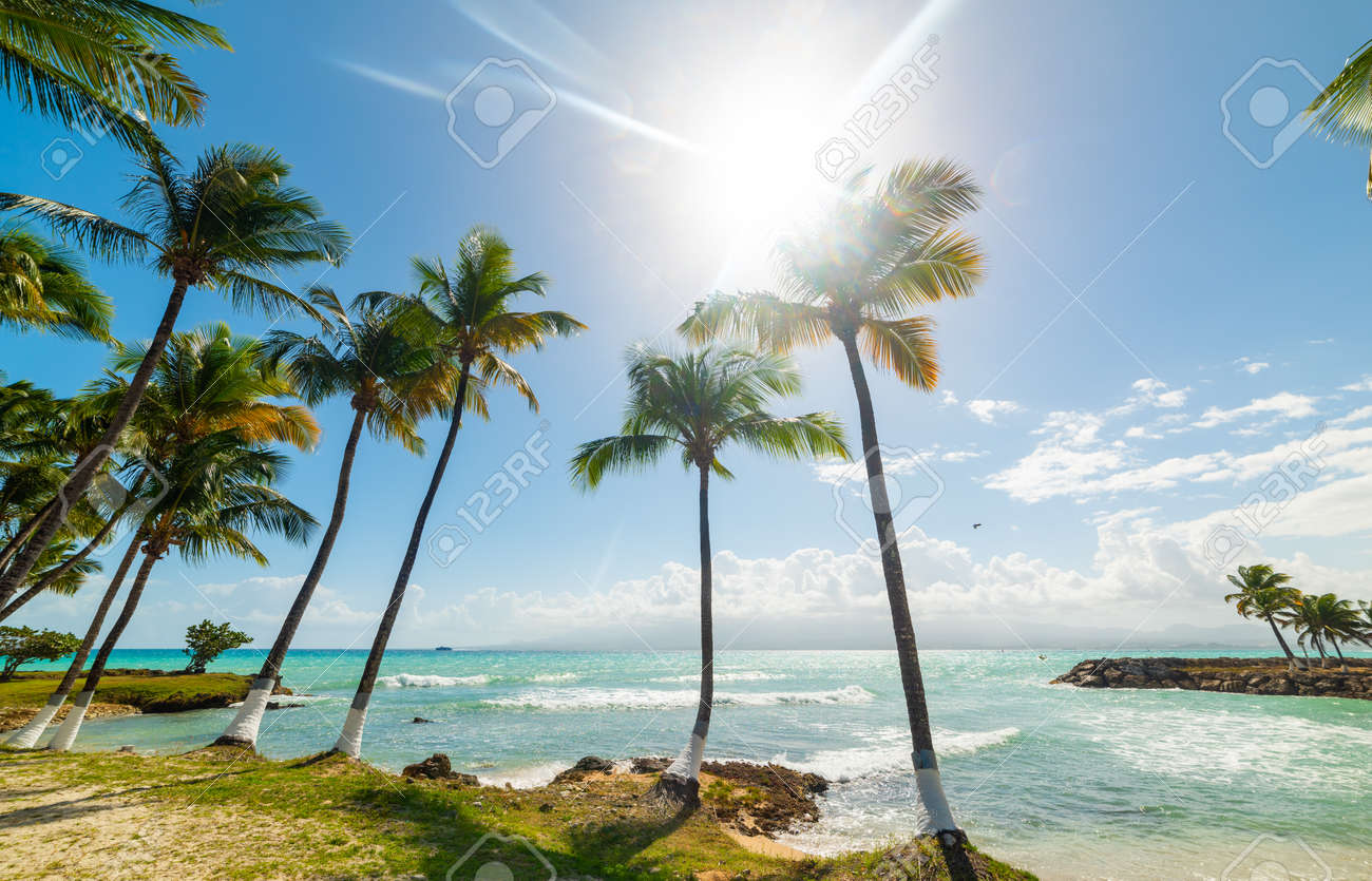 Coconut palm trees and turquoise sea under a shining sun in Bas du Fort beach in Guadeloupe, French west indies. Guadeloupe is an archipelago that is part of the Lesser Antilles in the Caribbean sea - 153586810