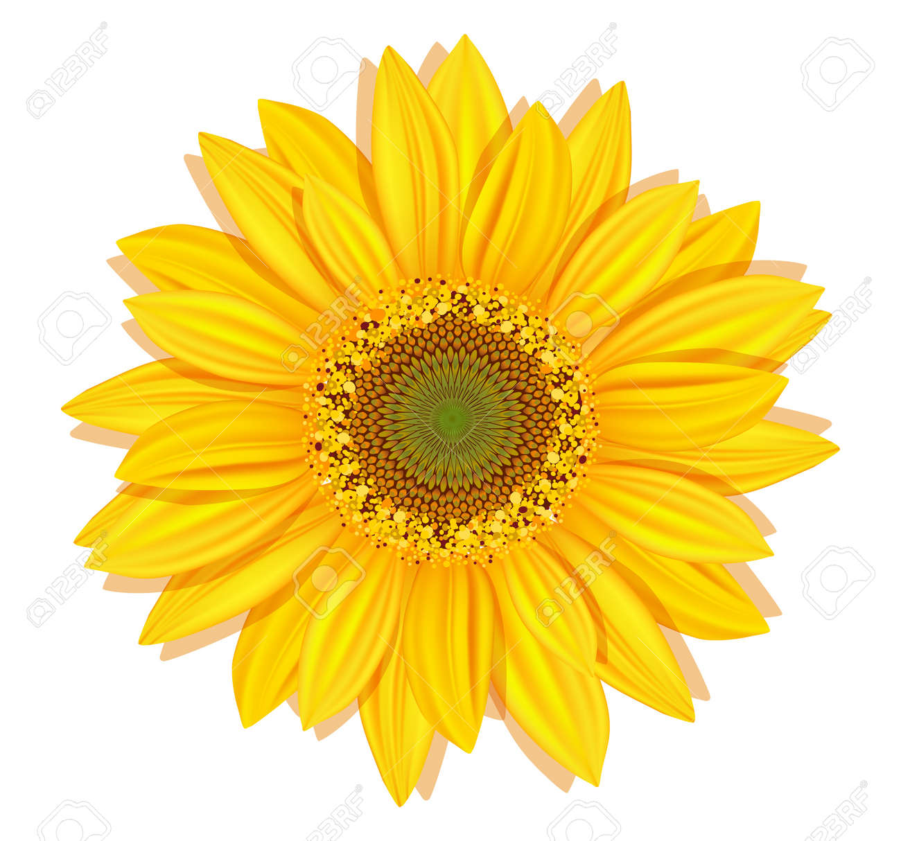 32 071 sunflower cliparts stock vector and royalty free sunflower rh 123rf com sunflower clip art outline sunflowers clip art free