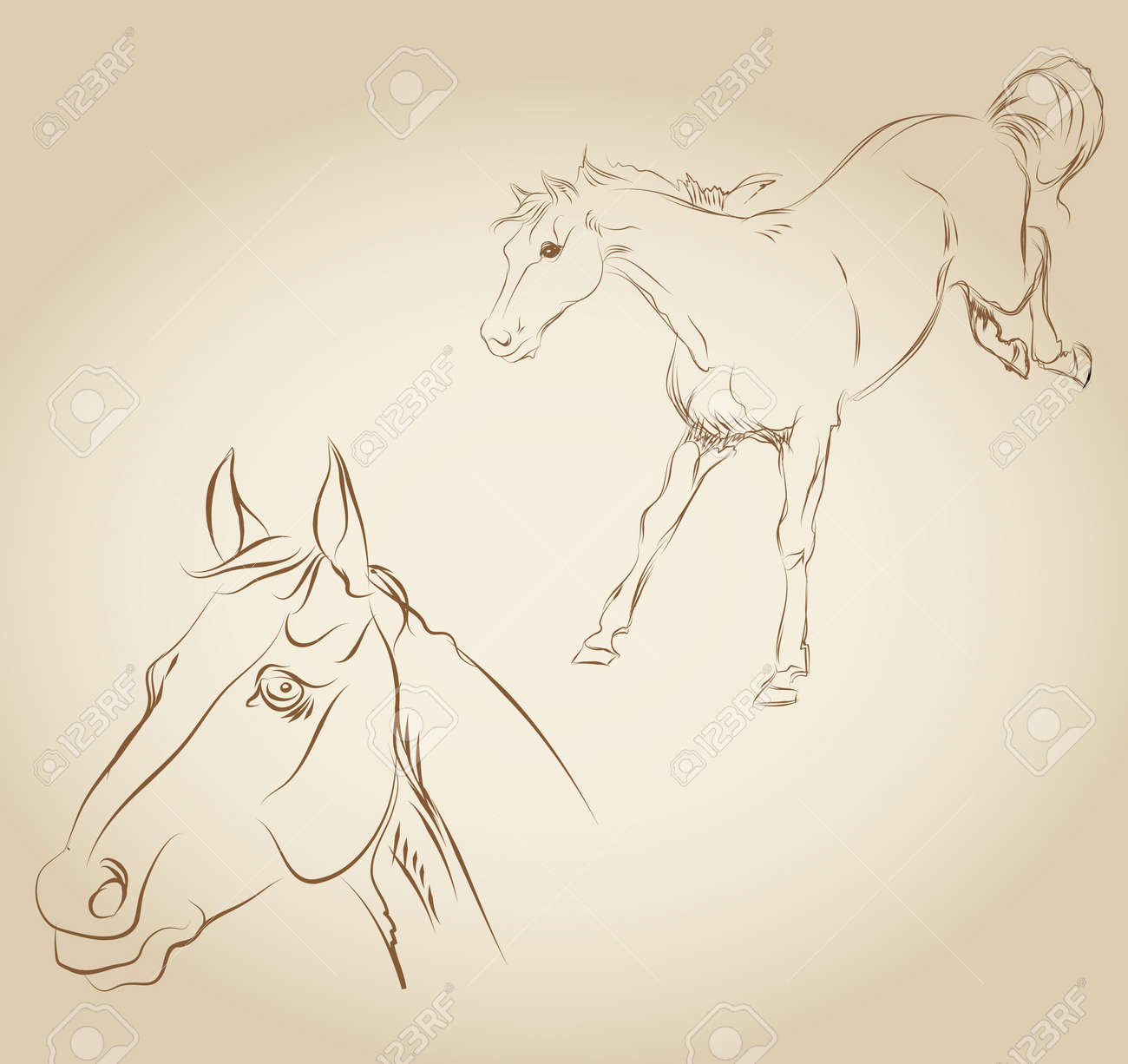 Skinny Horse Drawing Horse Draw Vector Draw a