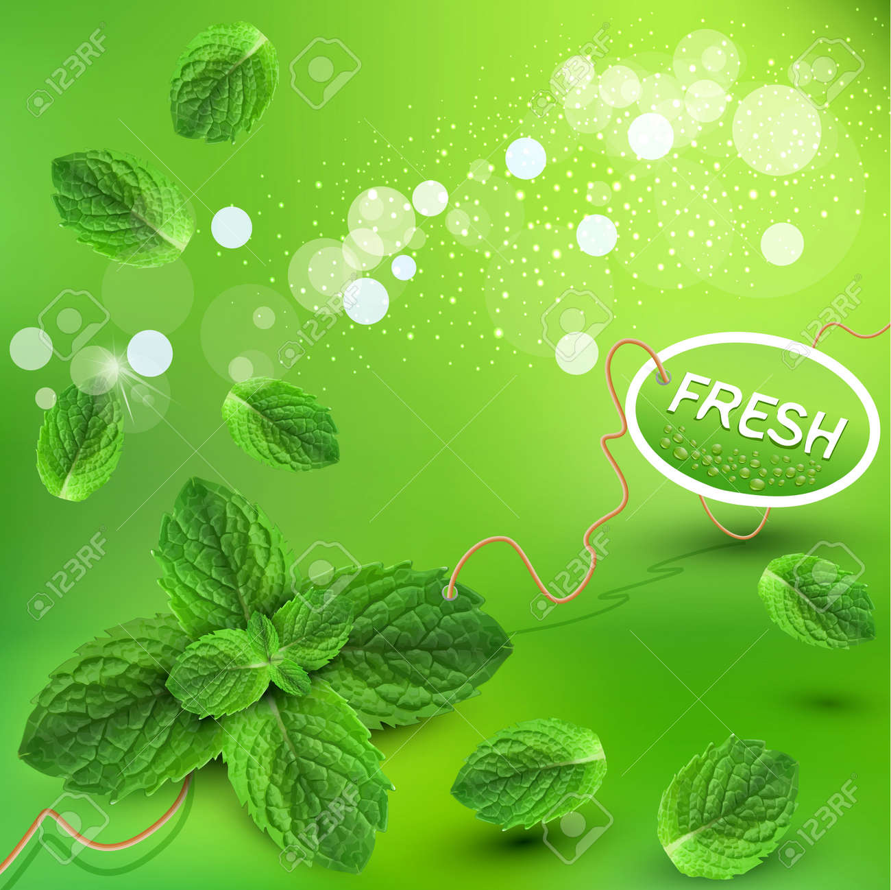 vector green background with fresh mint leaves Stock Vector - 13038249