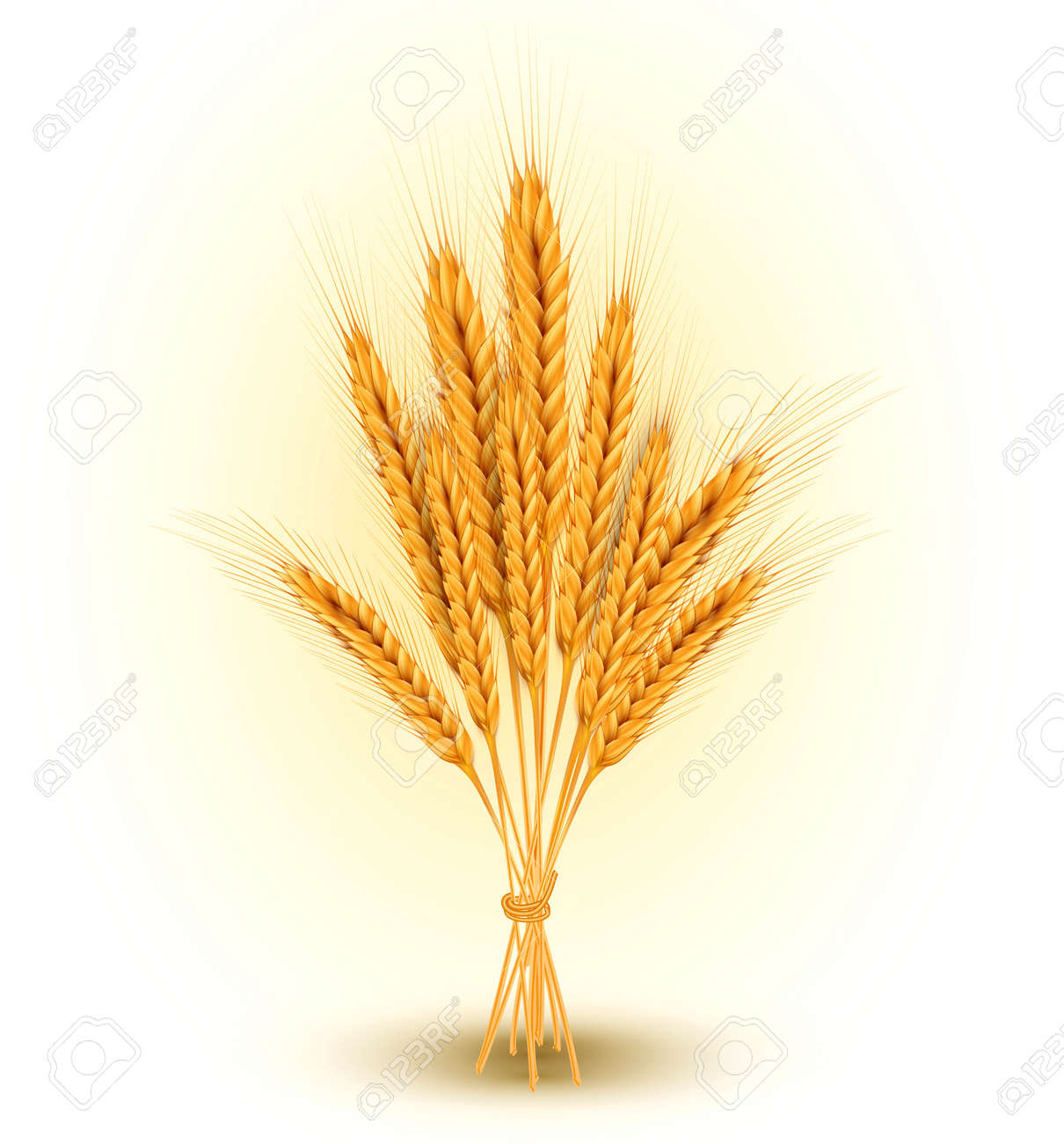 background with a sheaf of golden wheat ears Stock Vector - 20747291