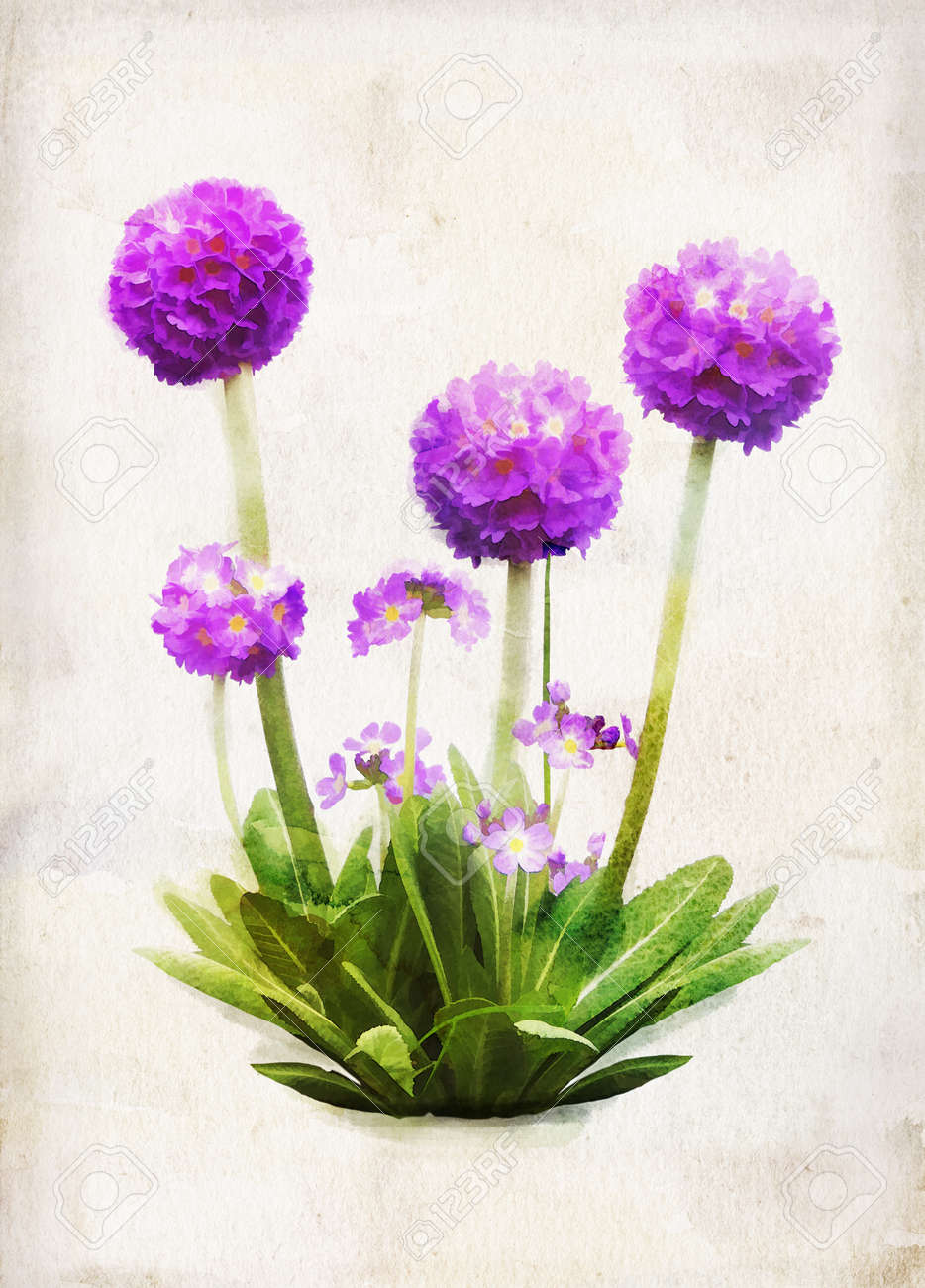 Illustration of watercolor lilac primula on a vintage background - 13642552