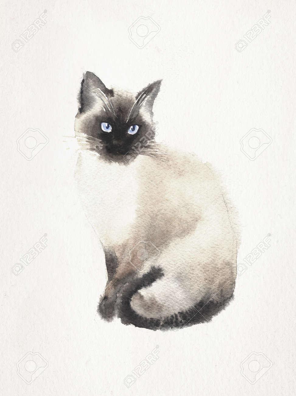Acuarela Y Lápiz De Dibujo De Un Gato Siamés En Un Fondo De La