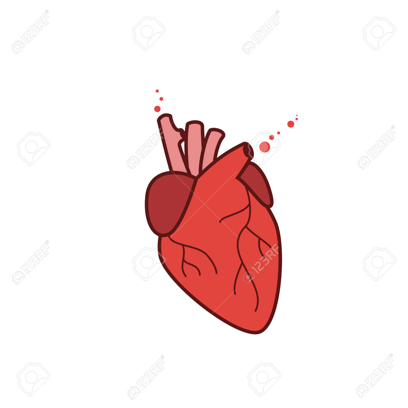Human heart icon, vector realistic illustration