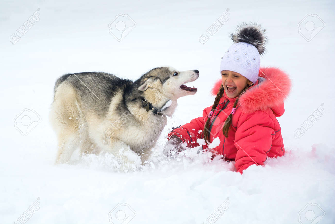 6c4f07640de A little girl in a pink jacket and hat playing and laughing with a Husky dog