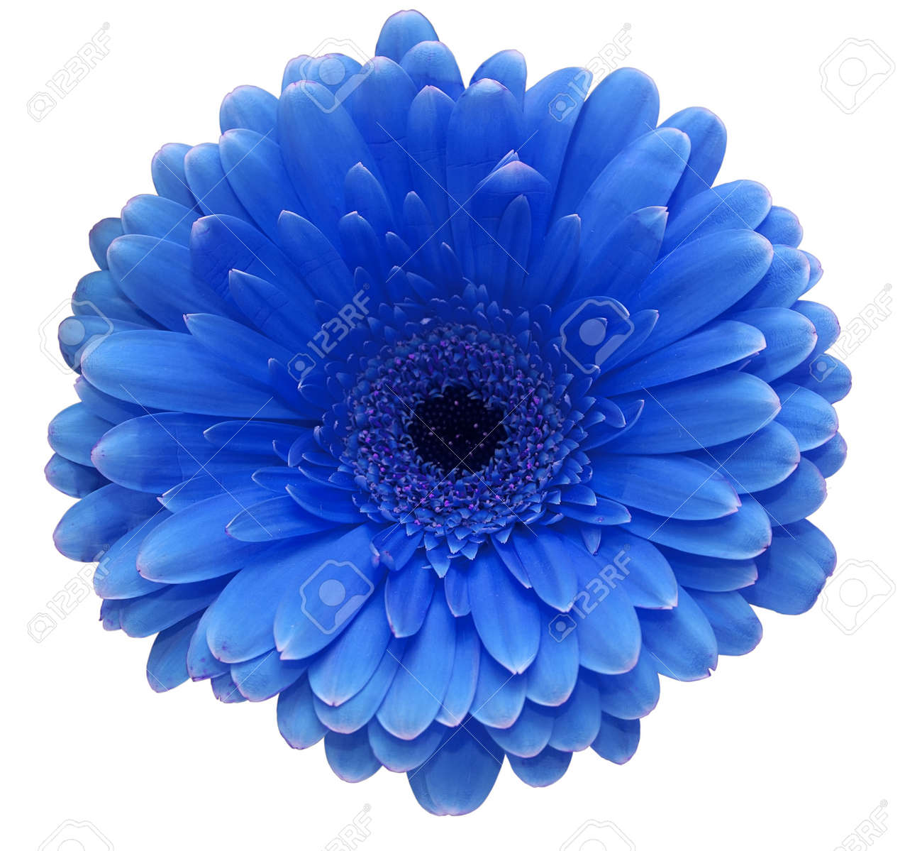 blue flower stock photos  pictures. royalty free blue flower, Beautiful flower