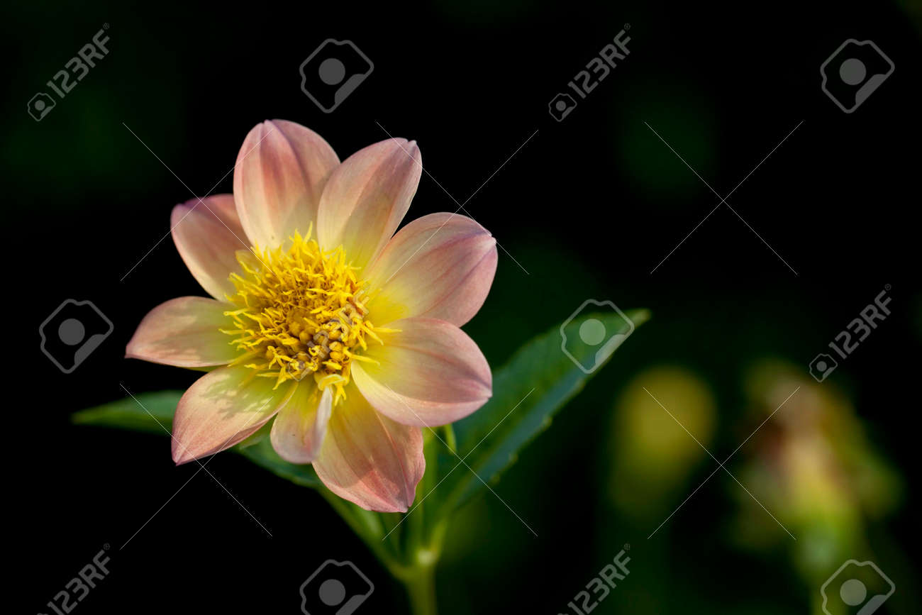 Focus on a beautiful pink flower - 139780694