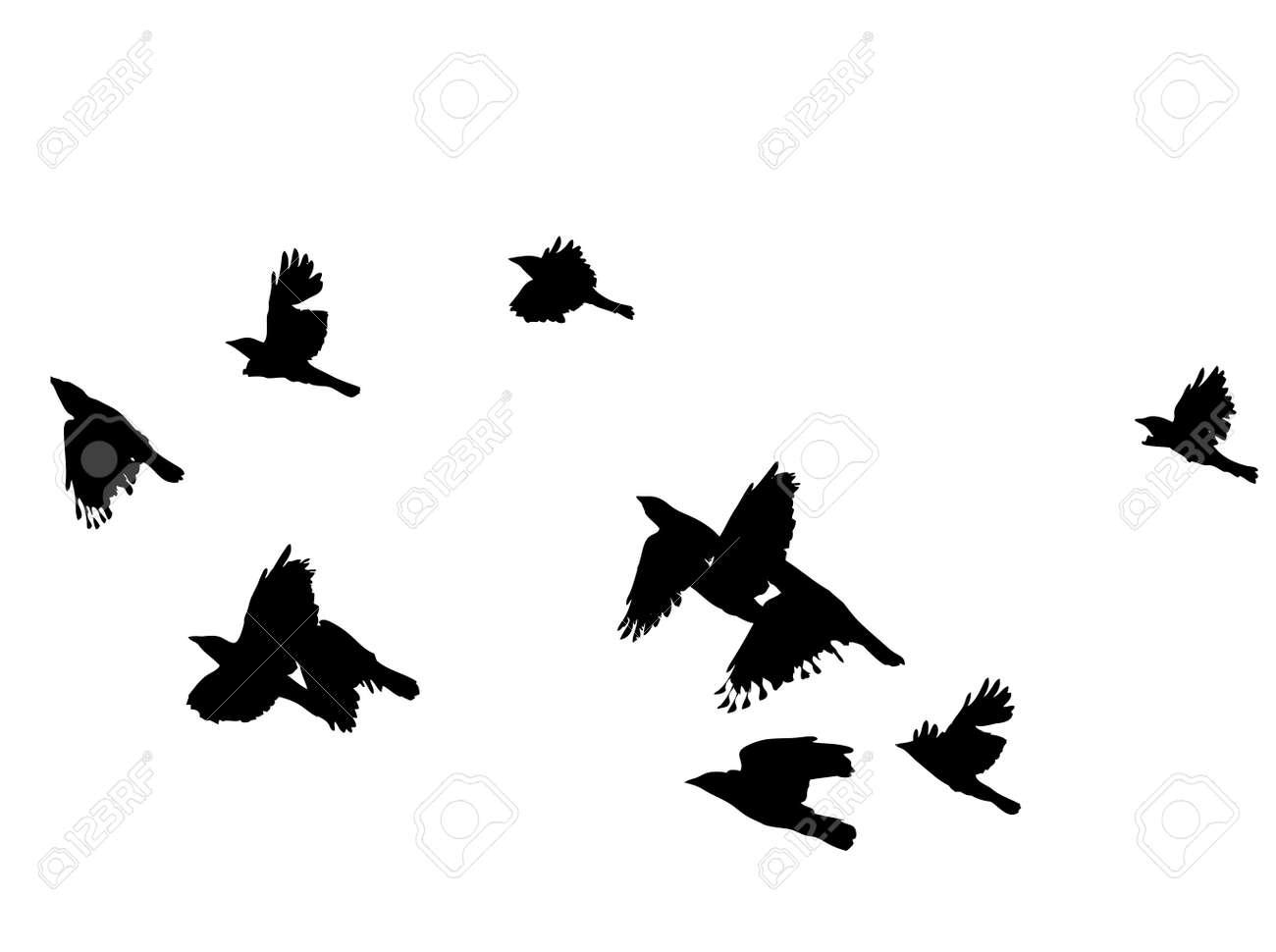 black birds in flight over white, vector illustration, Stock Vector - 3129058