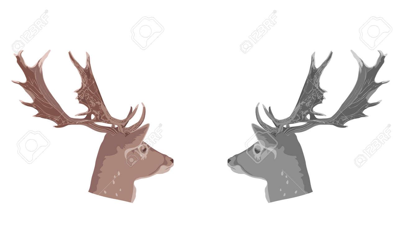 buck deer head, vector Illustration Stock Vector - 4885987