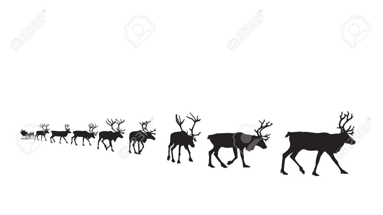 reindeer pulling sleigh stock photos u0026 pictures royalty free