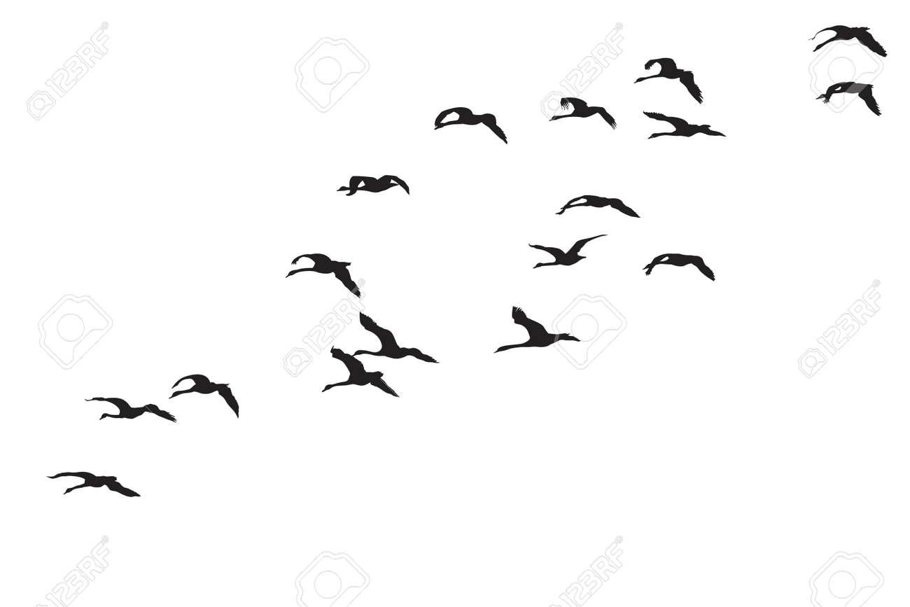 Flock Of Birds Clipart...