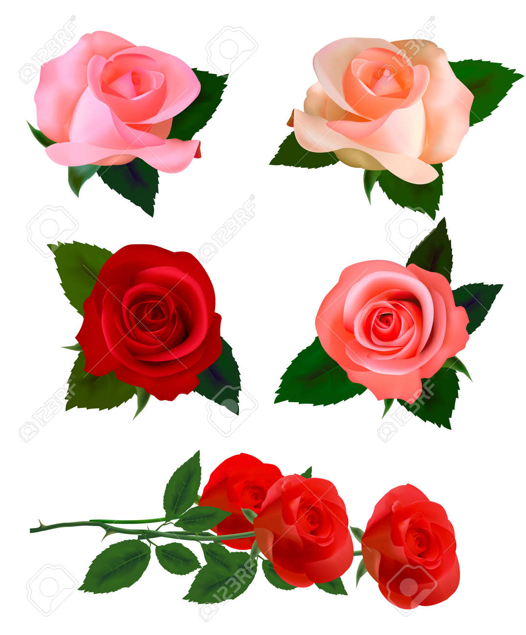 set with a beautiful roses photo realistic royalty free cliparts