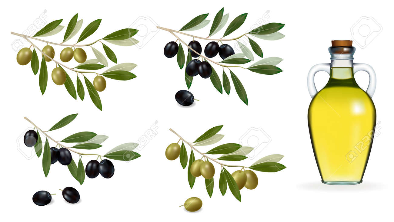 Vector illustration. Big set with green and black olives and bottle of olive oil. . Stock Vector - 10017322