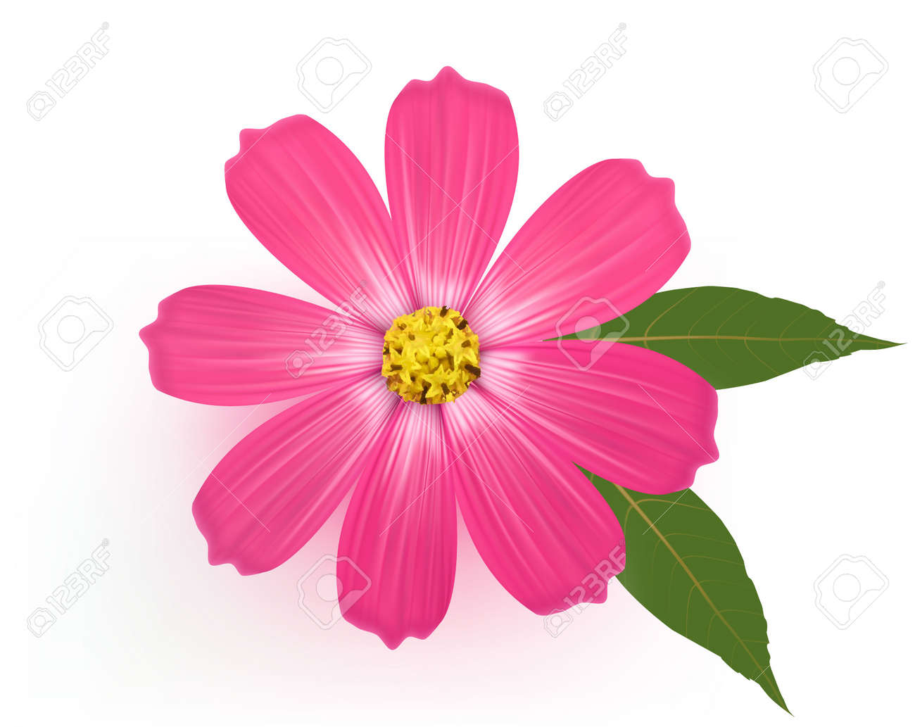 Beautiful Gerber Daisy flower with leaves. Vector. Stock Vector - 10300650
