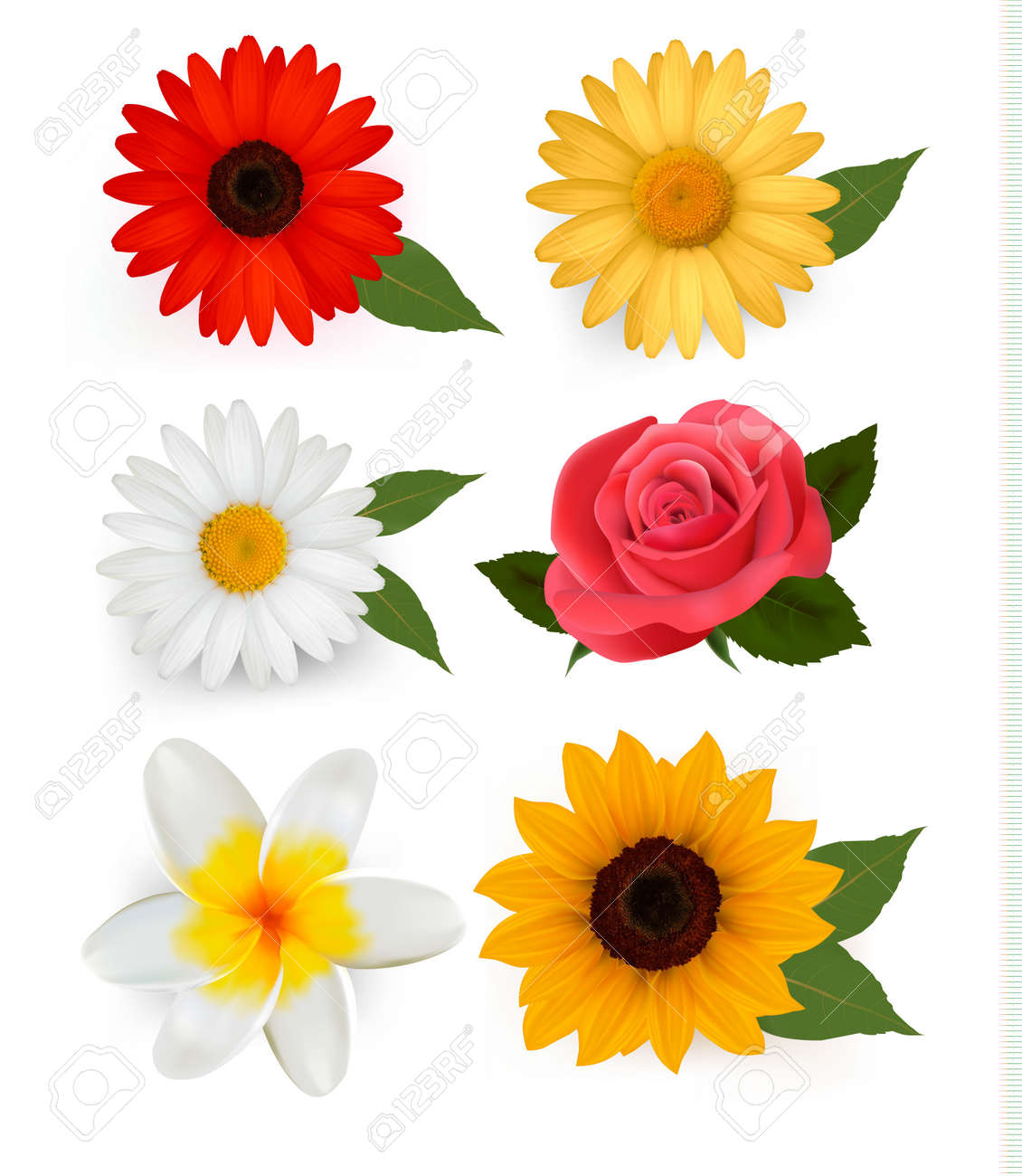 Big set of beautiful colorful flowers. Stock Vector - 10425572