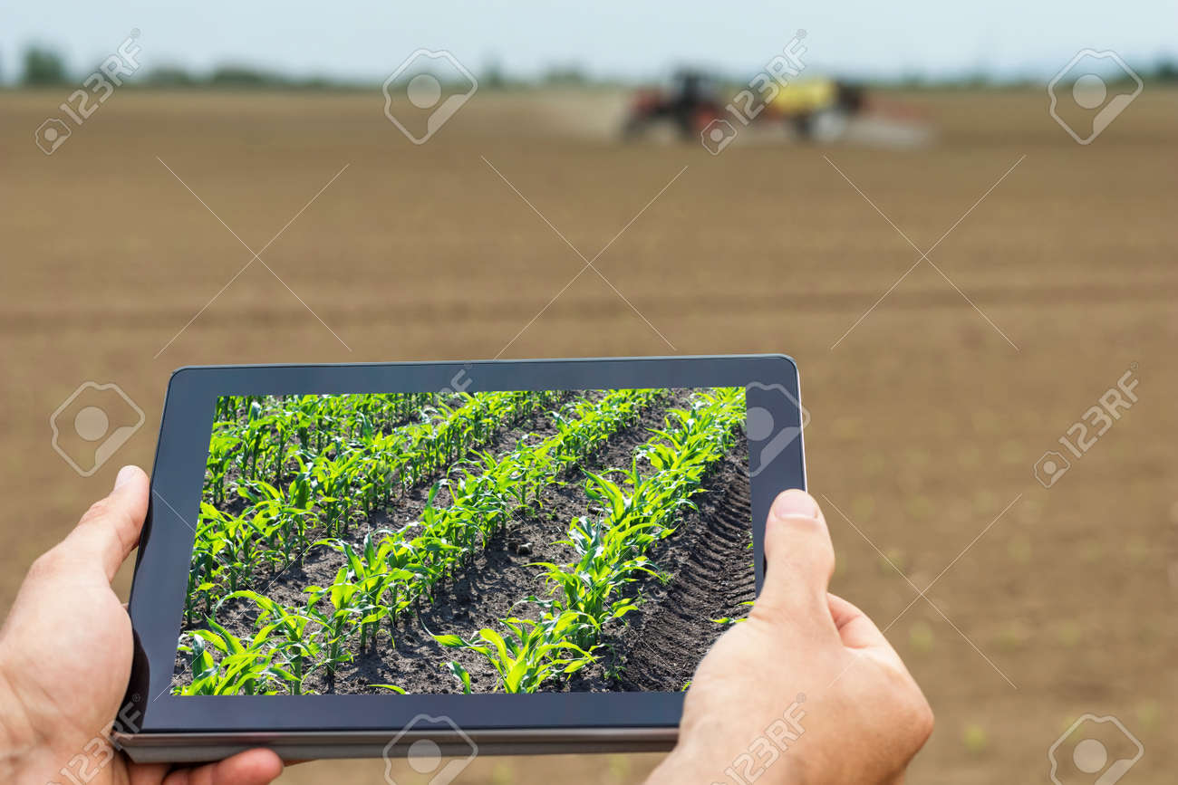 Smart agriculture. Farmer using tablet corn planting. Modern Agriculture concept. - 77300435