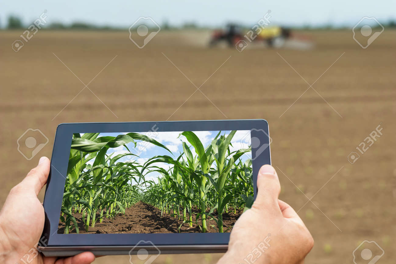 Smart agriculture. Farmer using tablet corn planting. Modern Agriculture concept. - 77300441