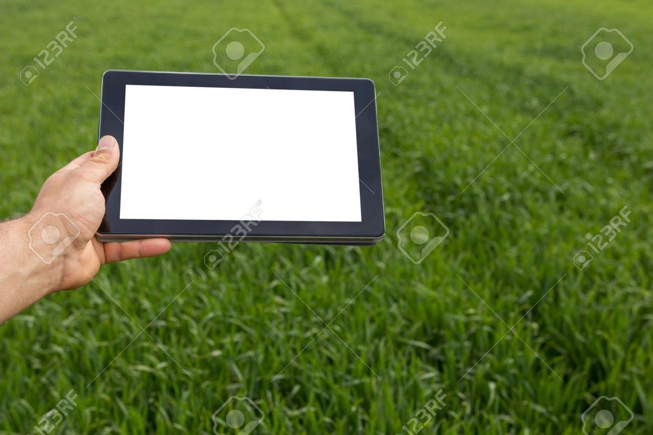 Farmer using tablet computer in green wheat field. White screen. - 77301025