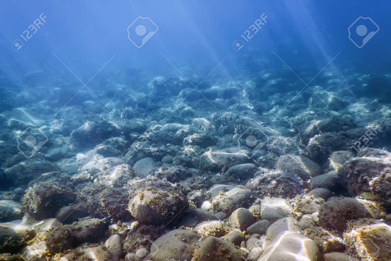 Sea Life Underwater rocks Sunlight, Underwater Life. - 106034137