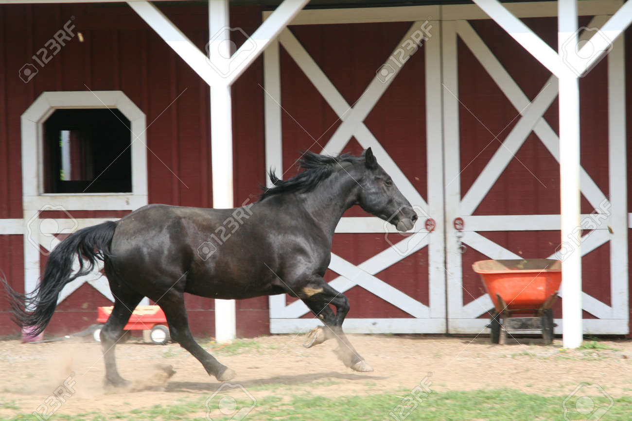 black horse canter Stock Photo - 14352730
