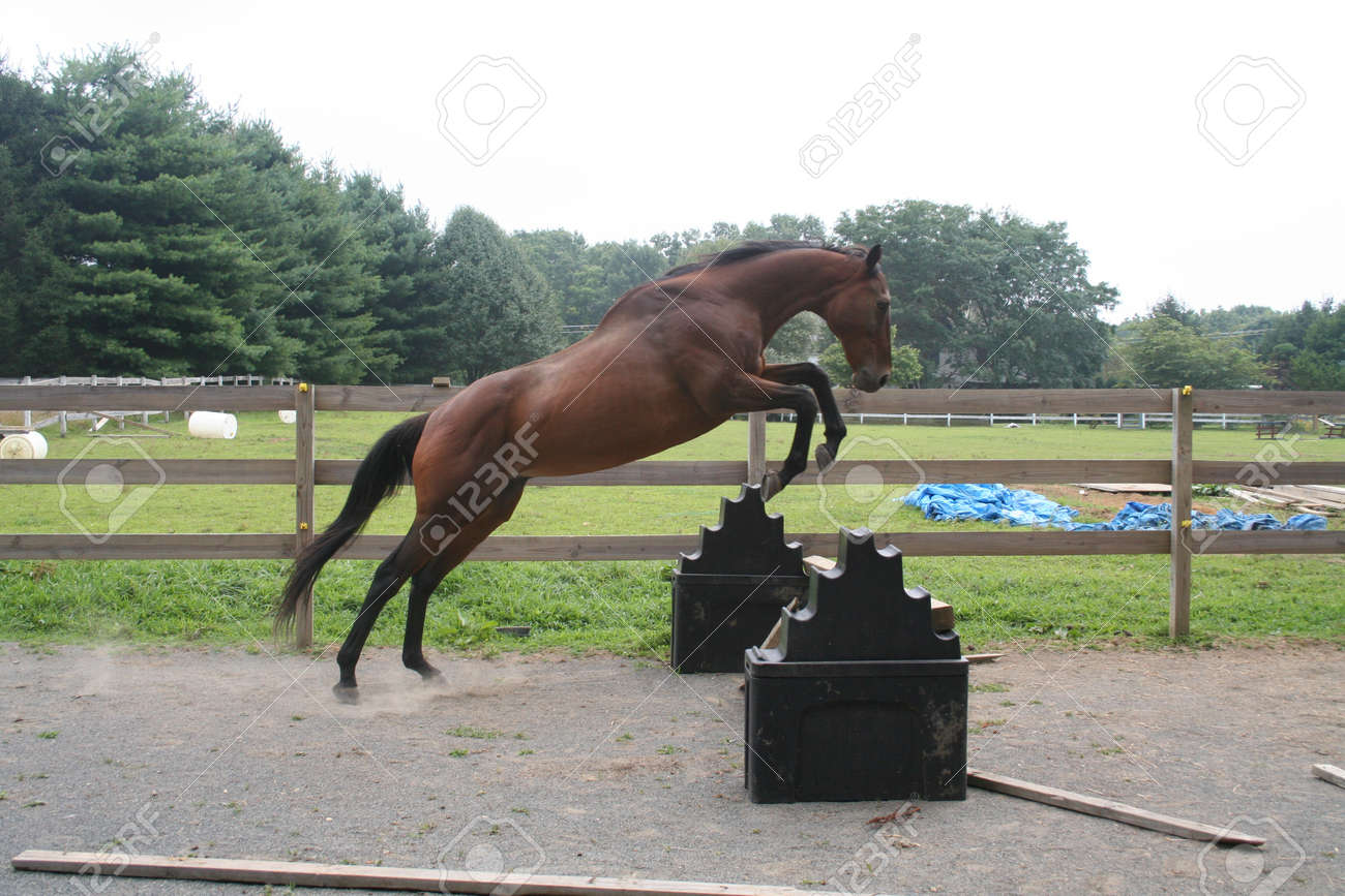 Thoroughbred Free Jump Stock Photo Picture And Royalty Free Image Image 14352762