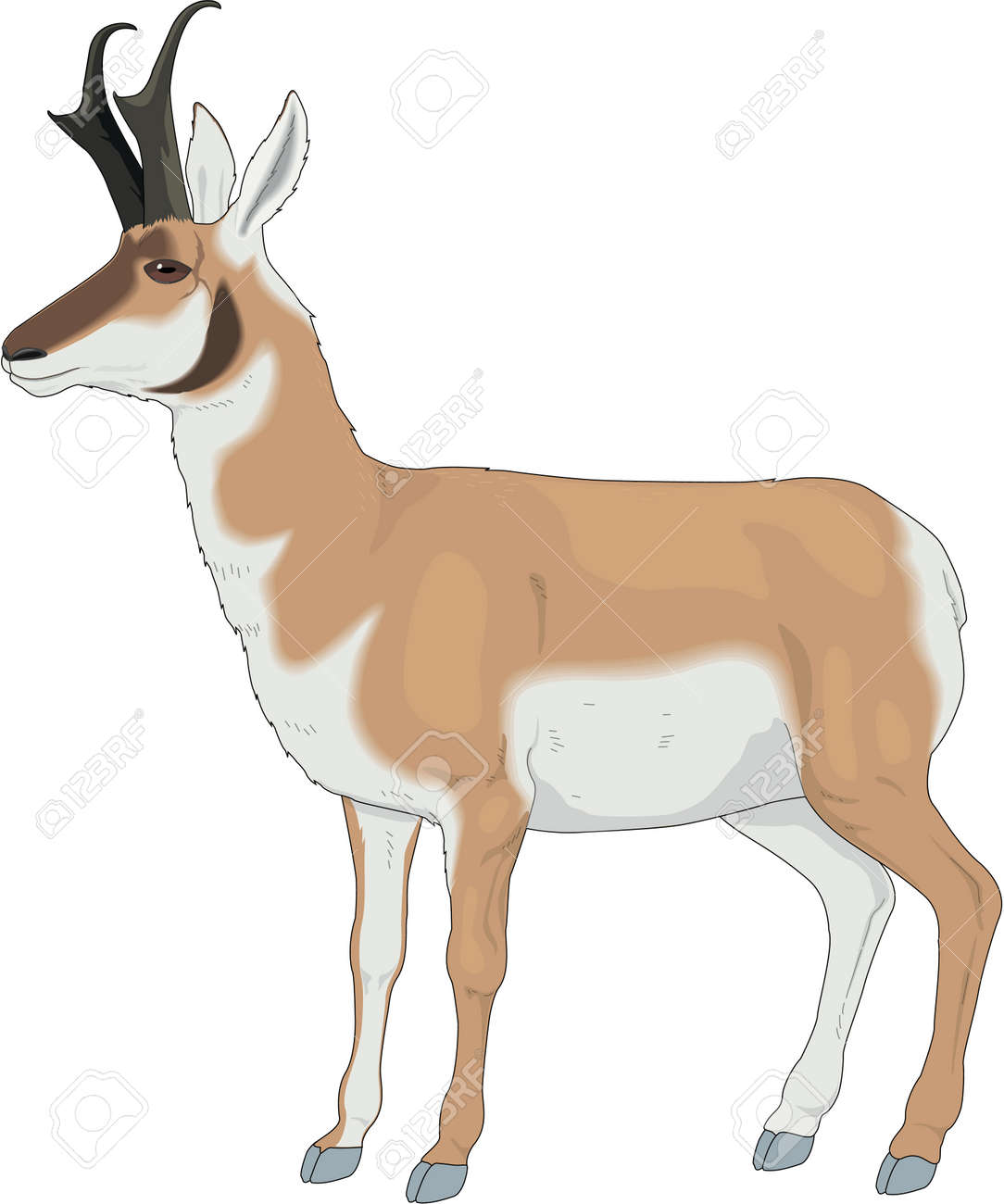 pronghorn antelope illustration royalty free cliparts vectors and rh 123rf com antelope clipart black and white pronghorn antelope clipart