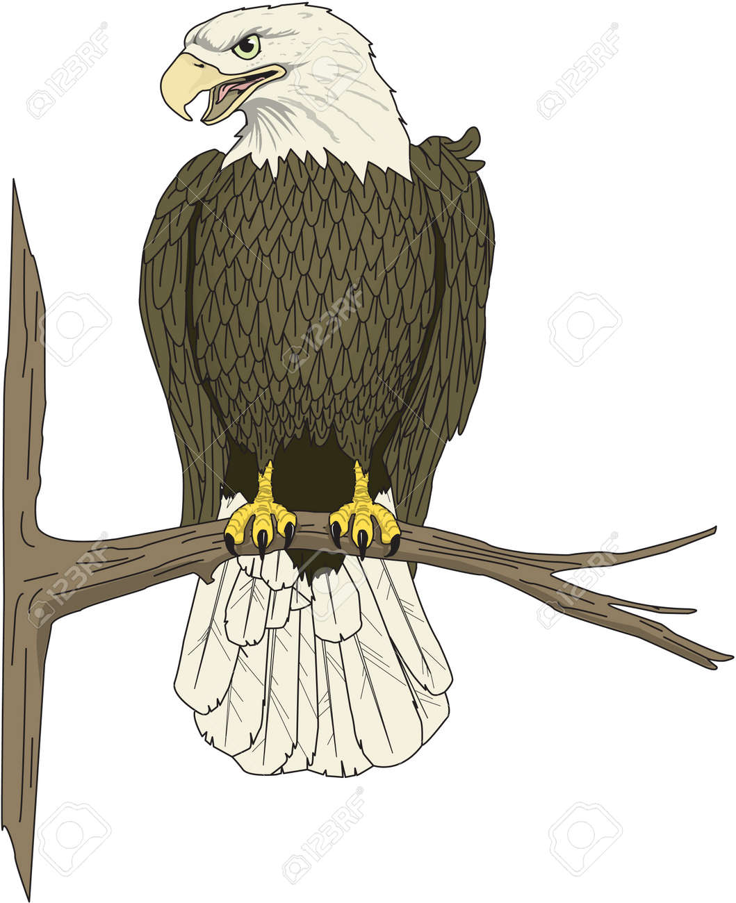 eagle perched illustration royalty free cliparts vectors and stock