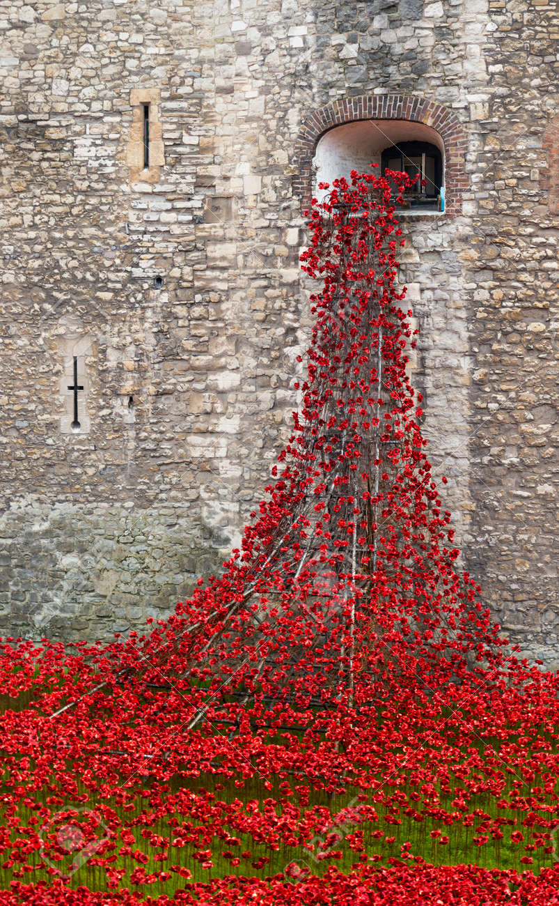 remembrance day poppy england images u0026 stock pictures royalty