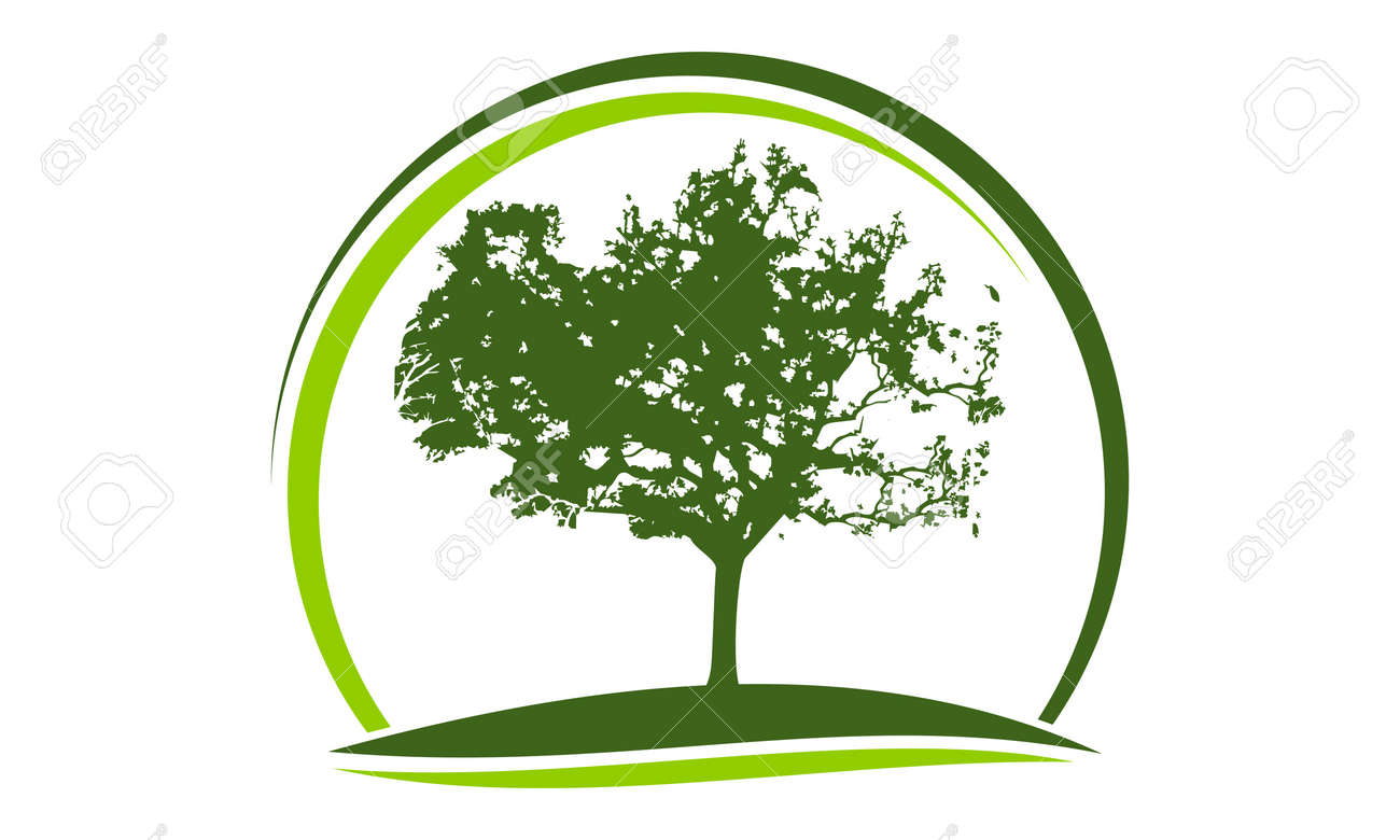 Oak Tree Logo Design Template Vector Royalty Free Cliparts Vectors And Stock Illustration Image 90818749