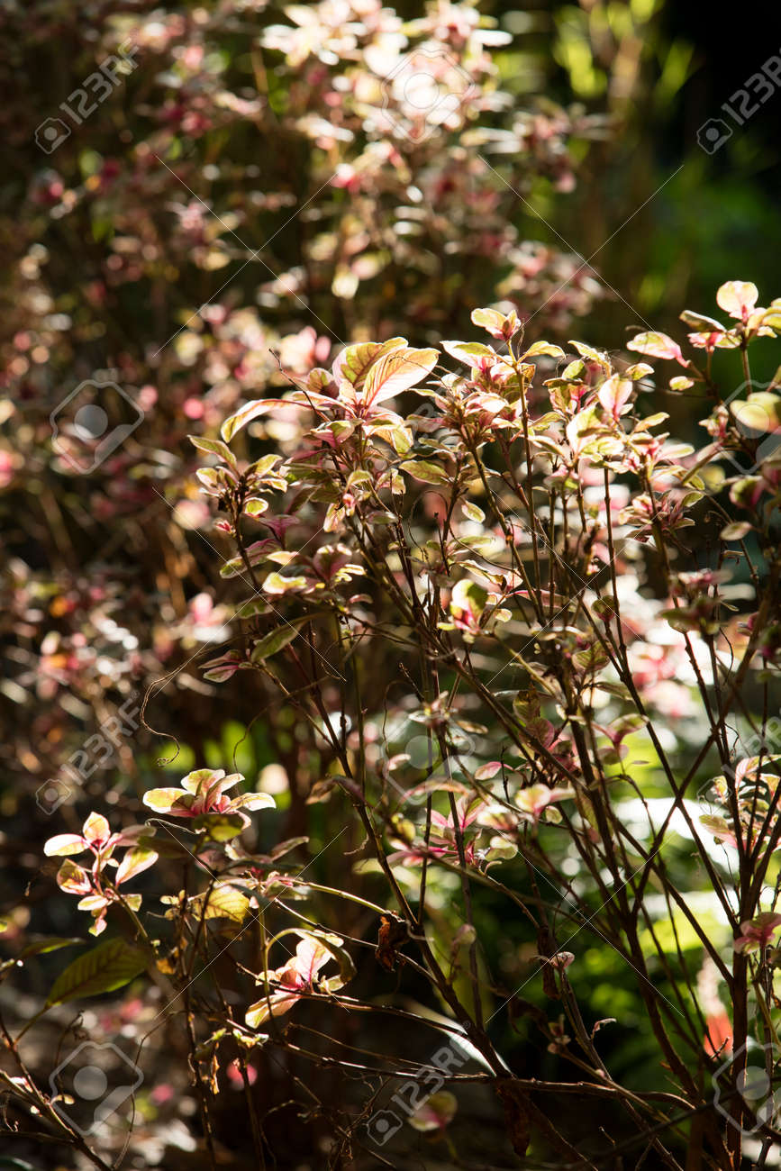 Delicate Lighting Through Pink And Green Brush At The San Diego ...