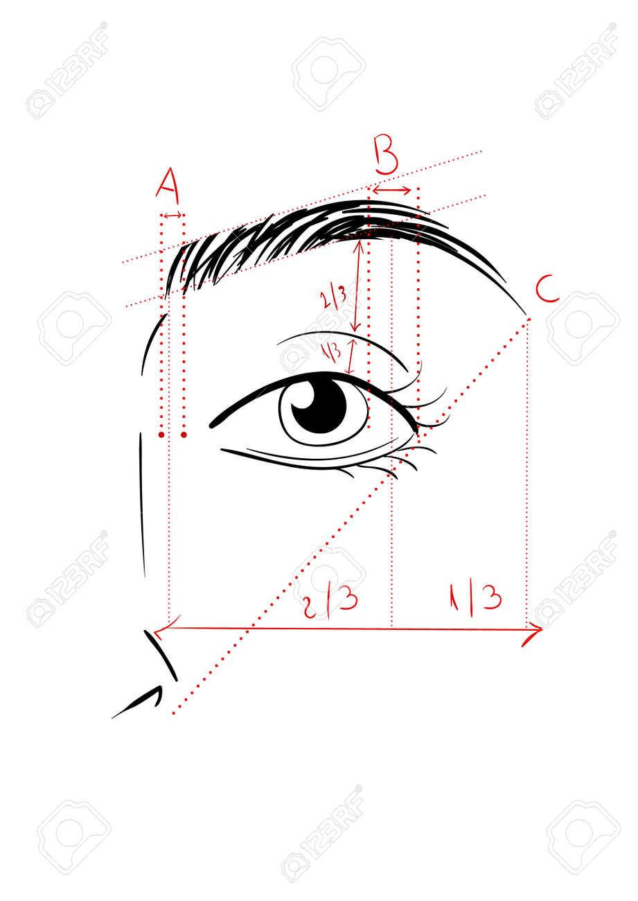 Sensational Vector Illustration Of Woman Face And Eyebrow Mapping How To Wiring Digital Resources Nekoutcompassionincorg