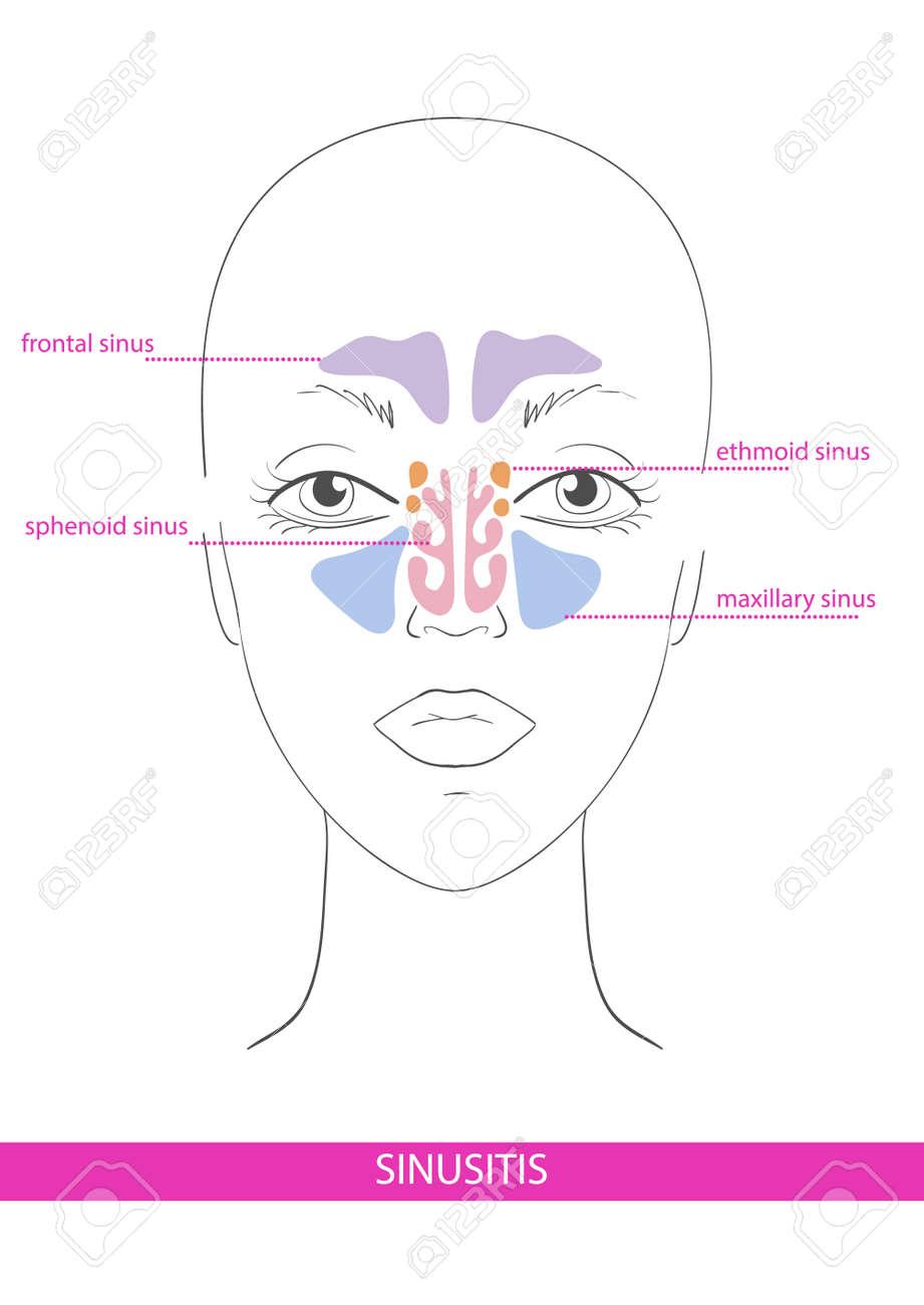 Ausgezeichnet Teile Des Gesichts Anatomie Zeitgenössisch - Anatomie ...
