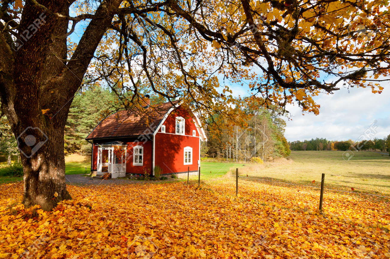 Picturesque fall background of a quaint traditional red Swedish house amongst a carpet of yellow orange autumn leaves in a peaceful country landscape Stock Photo - 15834314