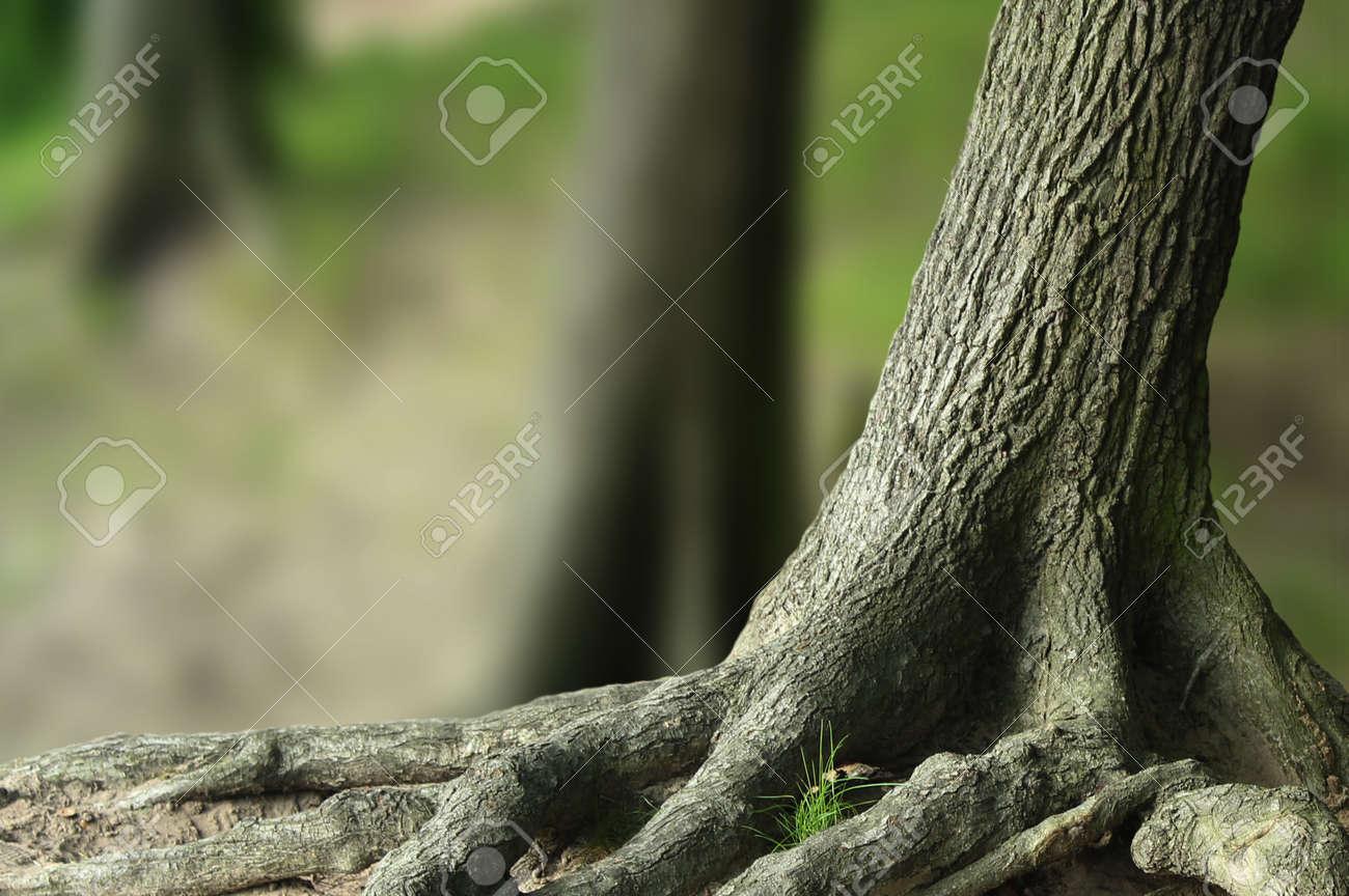 tree - 7280742