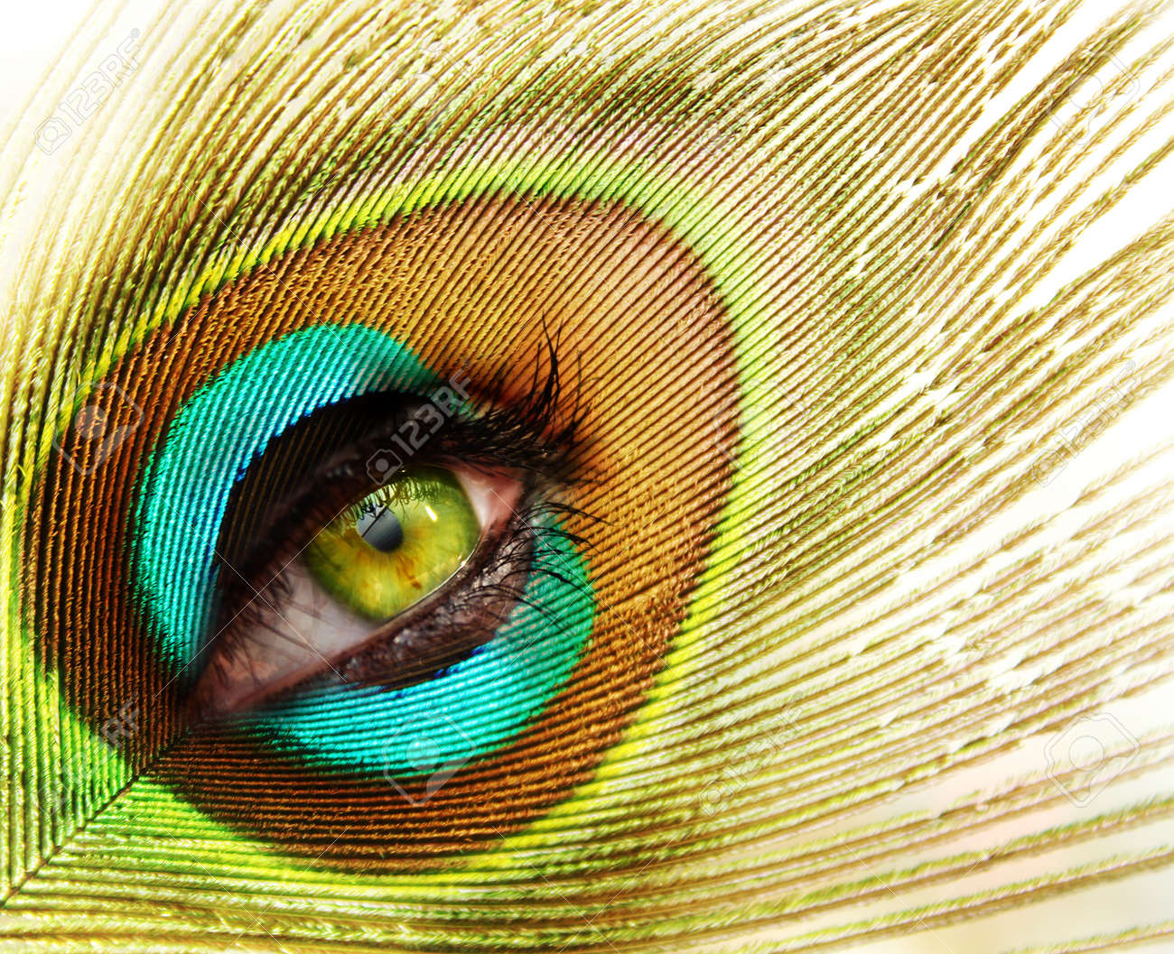 woman looking through peacock feather Stock Photo - 7454051