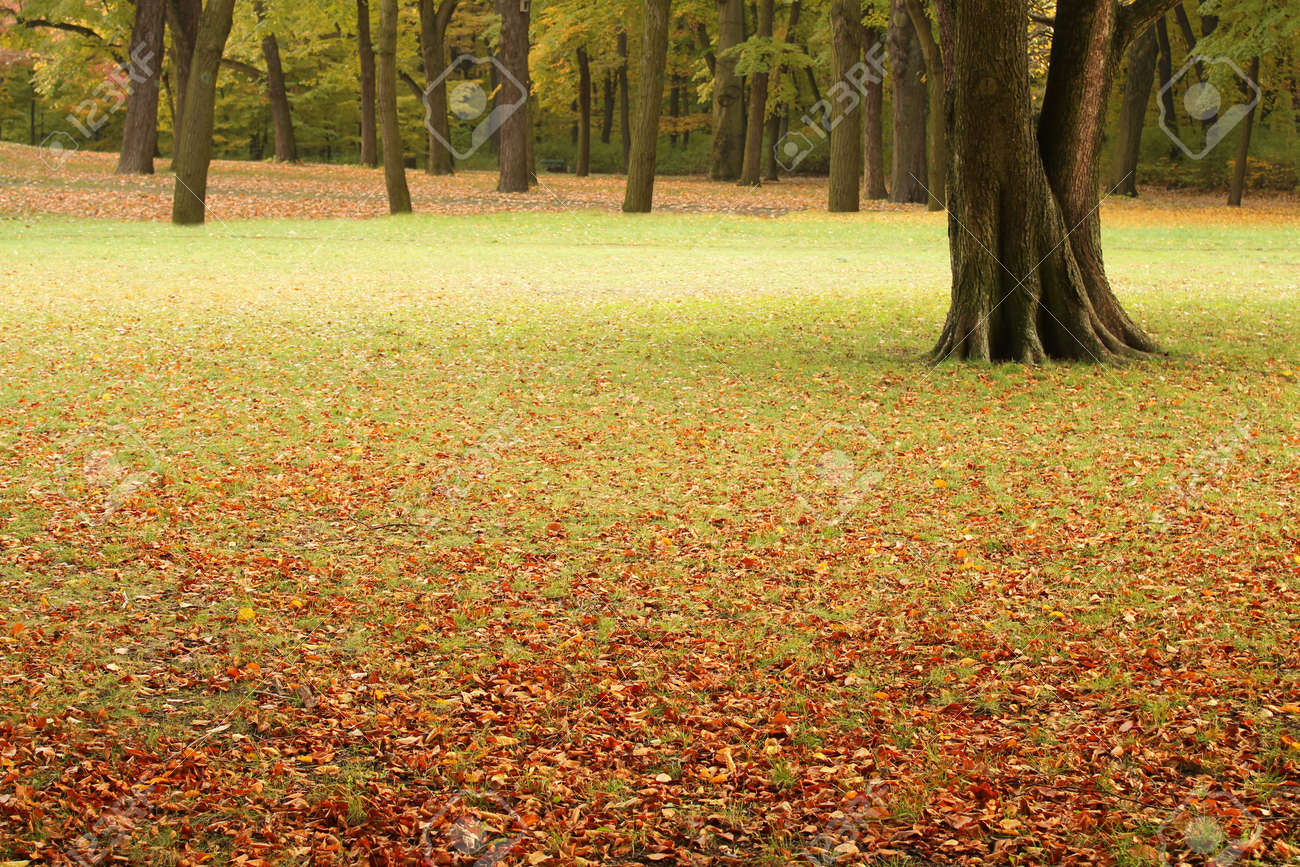 autumn background Stock Photo - 8066765