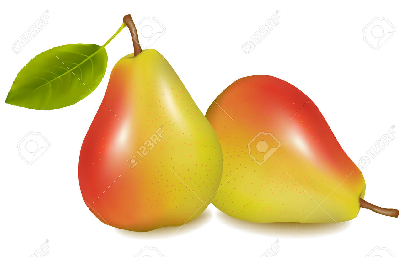 Two ripe yellow pears with green leaf. illustration Stock Vector - 8791750