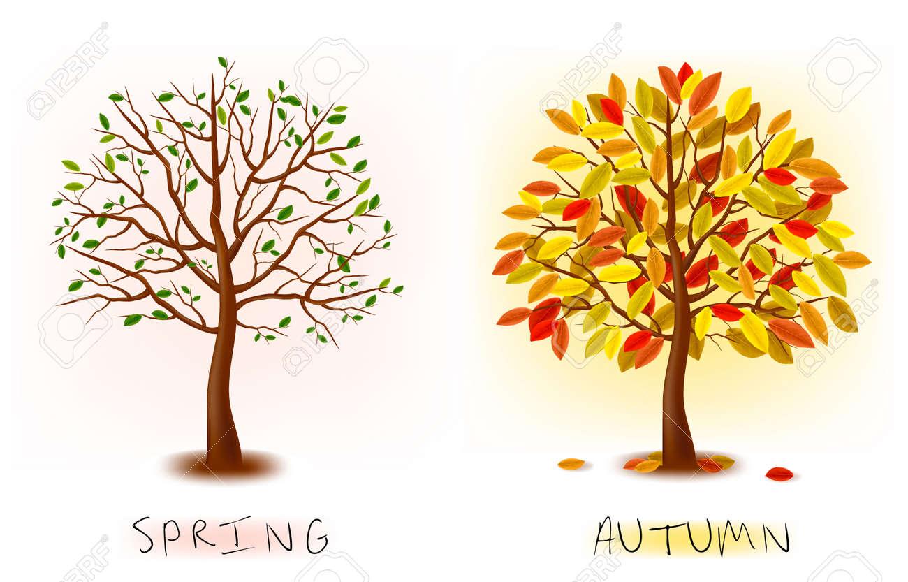 1d20b730c5e9 Dos temporadas - primavera, otoño. Árbol de arte hermoso para su diseño.  ilustración.
