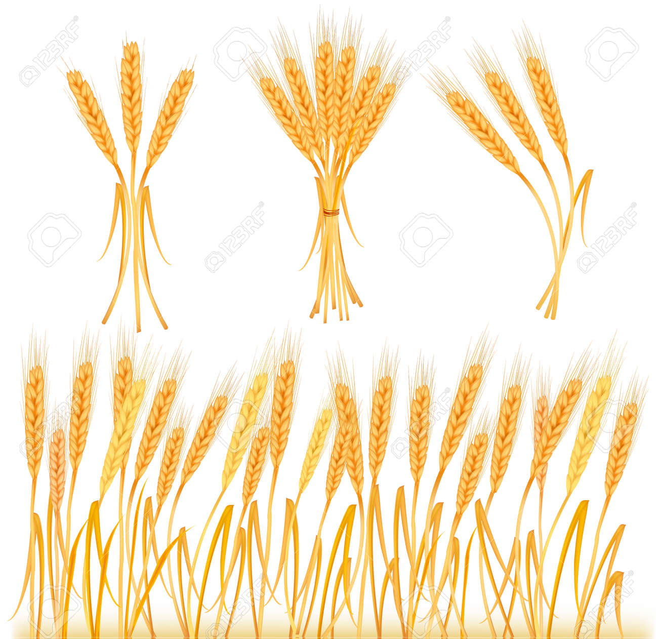 Ripe yellow wheat ears, agricultural illustration Stock Vector - 9053489