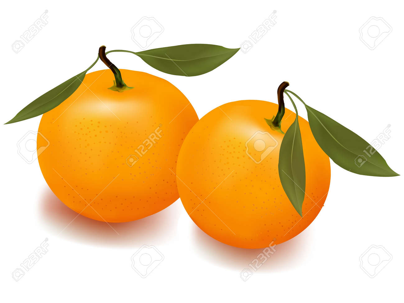 Orange Fruit Vector  orange  mandarin  fruit