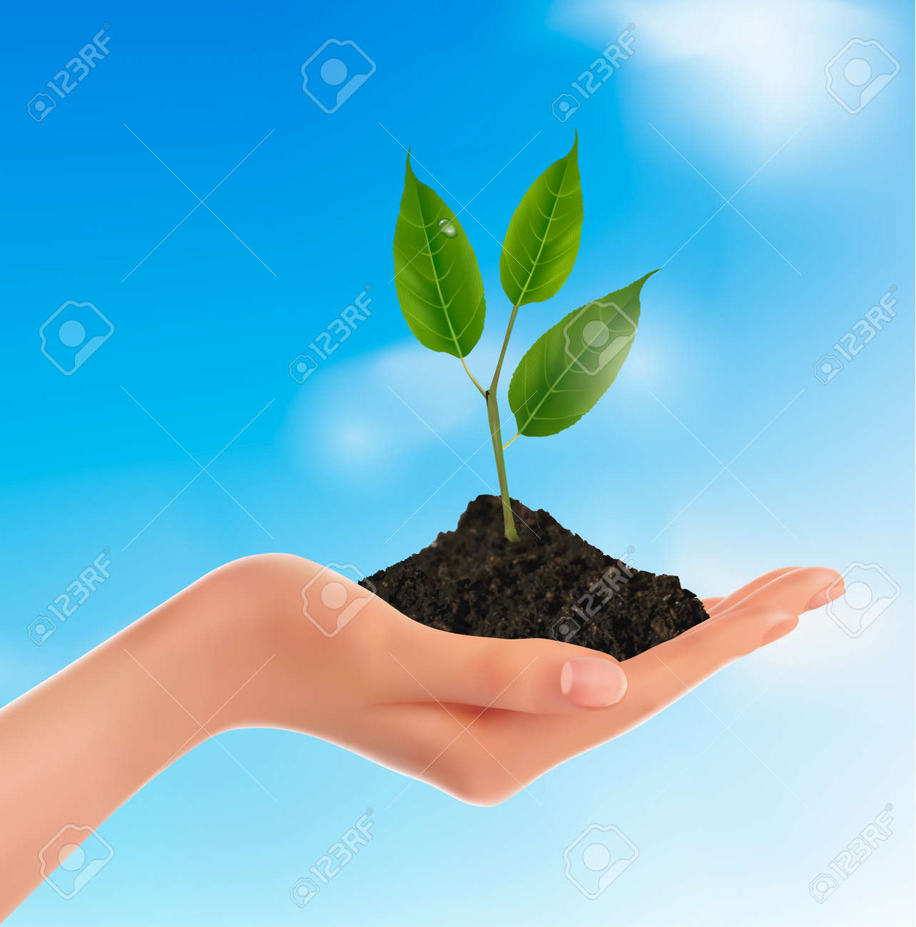 Young plant in hand  Vector illustration Stock Vector - 12346053