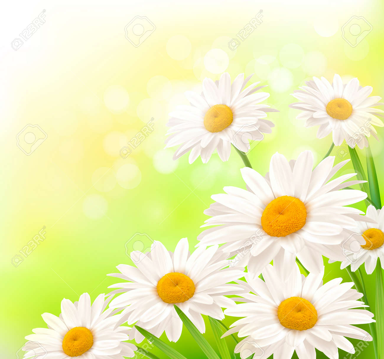 Beautiful background with grass and daisies  Vector Stock Vector - 12772823