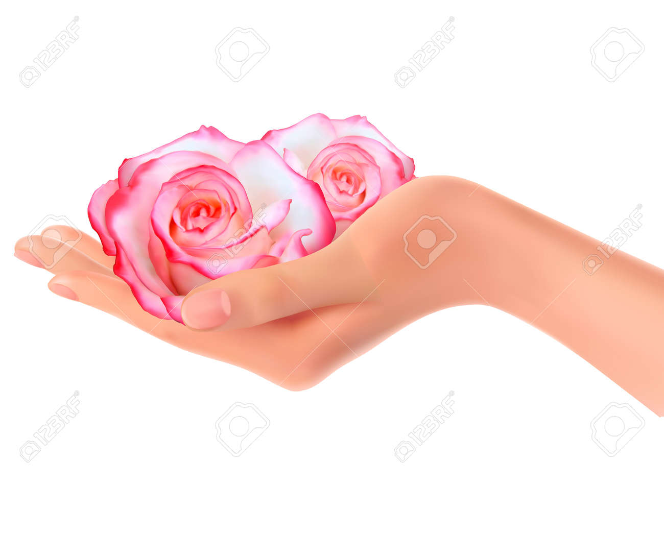 Two pink roses in a hand  Vector Stock Vector - 12772812