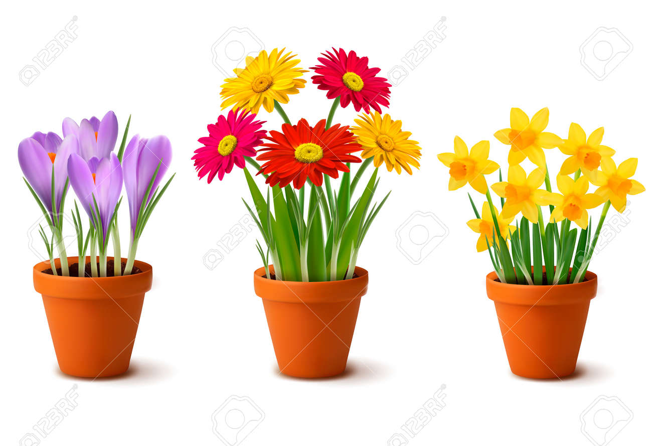 Spring Colorful Flowers In Pots Royalty Free Cliparts Vectors And
