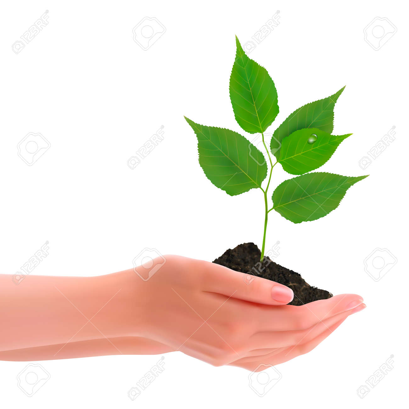 Hands holding young plant  Vector Stock Vector - 14021414